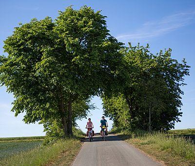 Zwei Personen radeln auf einer Straße unter zwei Bäumen entlang